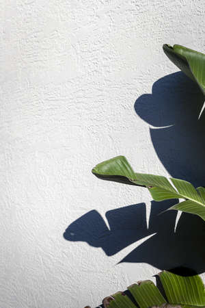 Green Leaves    White Wall Stock Photo