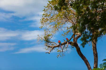 Nature and wildlife of Mato Grosso do Sul, Pantanal, Brazil