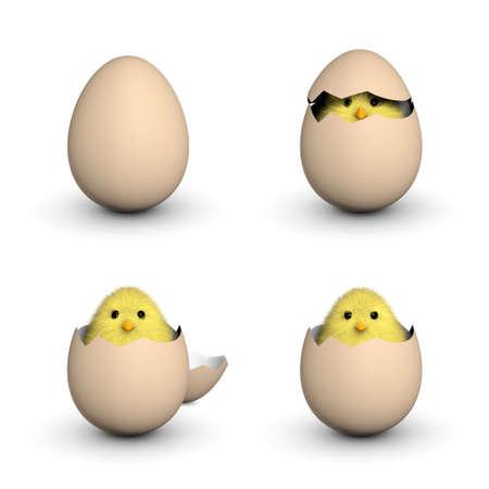 A fluffy yellow chick peeking out of an egg shell  3D render