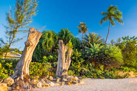 Two dead upright tree trunks and a lush vegetation on Seven Mile beach, Grand Cayman, Cayman Islands