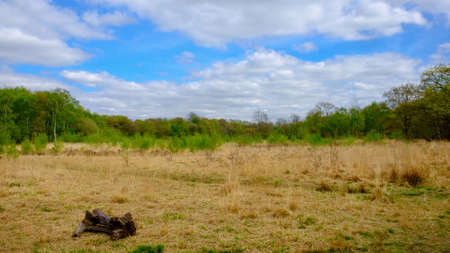 wimbledon: Laying tree trunk in one of Wimbledon Common meadow, England