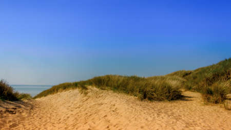Close up on Camber Sands Beach dune, East Sussex, U.K Stockfoto