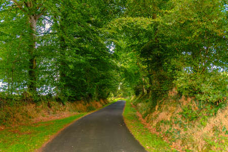 Country lane in the Orne countryside with a lush vegetation in summer, Normandy France