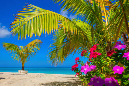 Small palm trees and flowers on a empty Seven Mile Beach during confinement, Cayman Islands