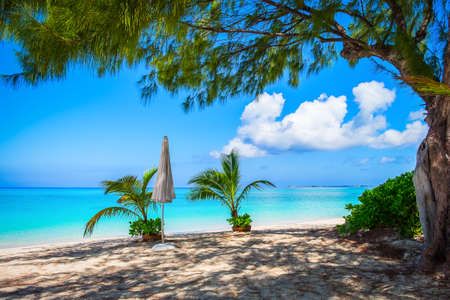 Small palm trees in pots and a close white parasol on a empty Seven Mile Beach during confinement, Cayman Islands Stock Photo