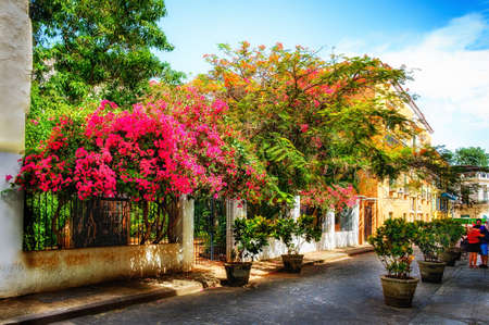 Havana, Cuba, July 2019, view of the Calle Mercaderes a paved street full of plants in pots and blooming trees