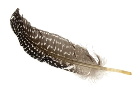 feather white: Piuma