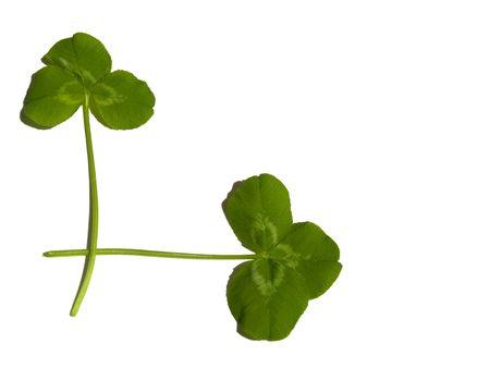 Irish clover corner Stock Photo - 6501609