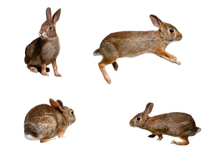 Wild rabbits collage on pure white background 스톡 콘텐츠