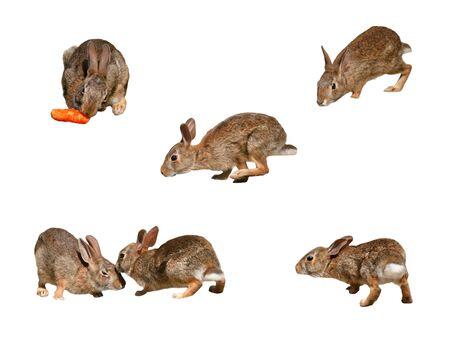 Conejos silvestres collage página 2 sobre fondo blanco puro  Foto de archivo - 7732501