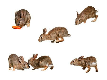 Wild rabbits collage page 2 on pure white background