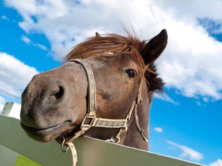 Face Horse 版權商用圖片
