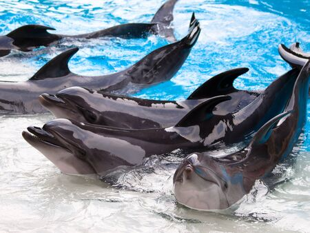 Dolphins group show in the pool Stock Photo - 8855386