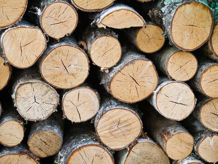 A pile of wood in a forest Zdjęcie Seryjne