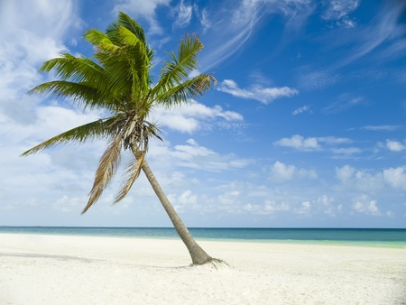 Caribbean ocean and palm trees in Mexico, Riviera Maya photo