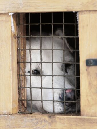 stray dog: White dog in the little box cage