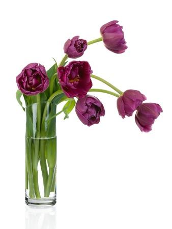 florero: Ramo de tulipanes en florero de vidrio aislado sobre fondo blanco