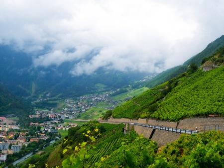 wine road: Terraced vineyard of Martigny, Switzerland in summer