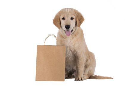 stitting: Golden Retriever puppy stitting with bag isolated on white background Stock Photo