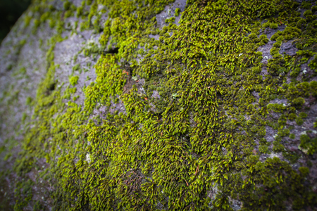 Moss growing on large rock