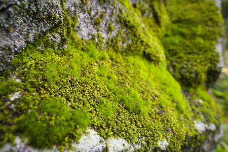 Moss variety growing on rock wall