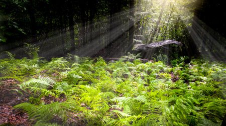 Natural fern in forest with penetrating sunrays