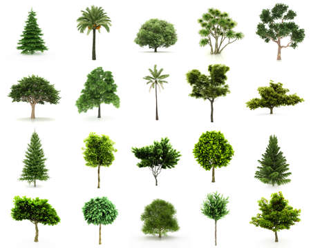 garden landscape: Perfect Group of Trees isolated on a white background. Twenty pieces with Large image Resolution