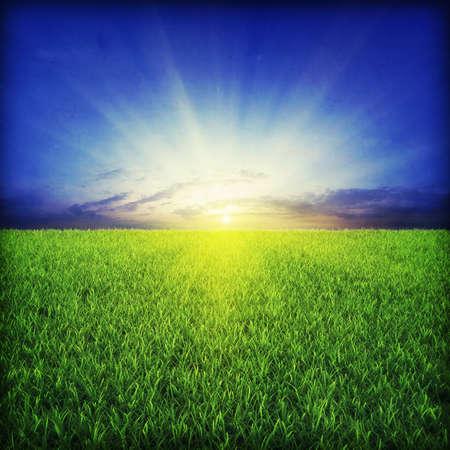 Green grassland on sunset Stock Photo - 7950069