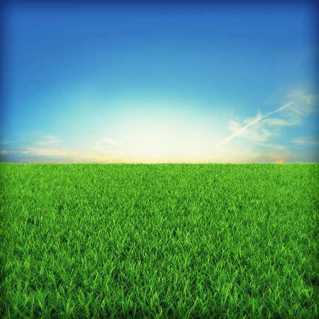 Green grassland on sunset Stock Photo - 7950053