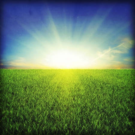 Green grassland on sunset Stock Photo - 7950066