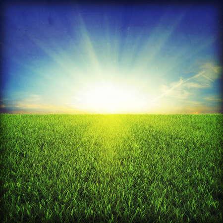 Green grassland on sunset Stock Photo - 7950066