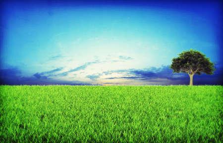 Green grassland on sunset Stock Photo - 7950044