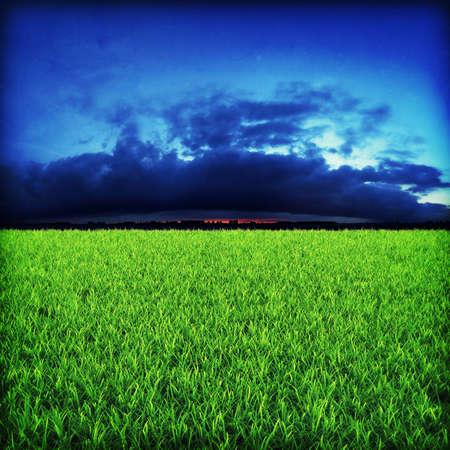 Green grassland on sunset Stock Photo - 7950071