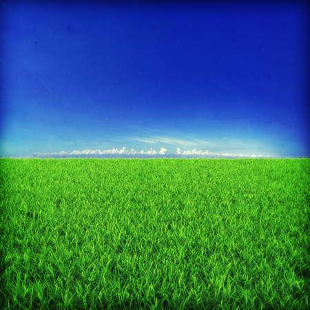 Green grassland on sunset Stock Photo - 7950045