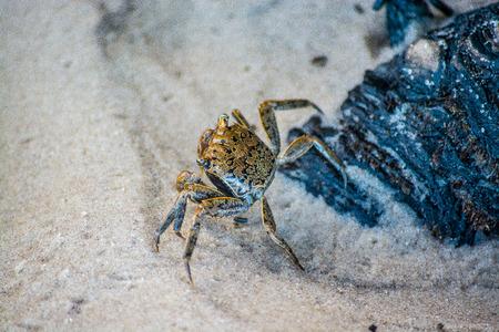 Crab Crawling On Beach
