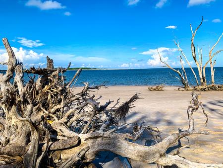 Driftwood On A Florida Beach