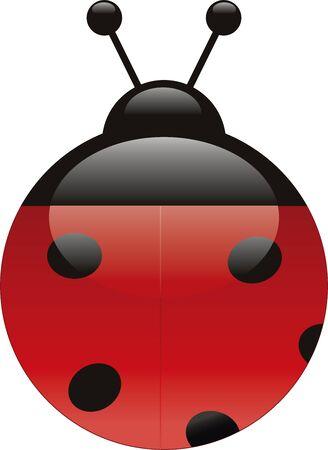 Vector illustration of a ladybug in aqua style