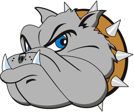 buldog: cabeza vector Bulldog muy enojado