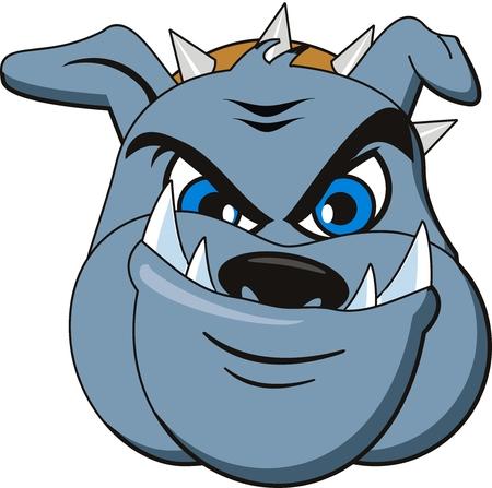 vector Bulldog head. Very angry Illustration
