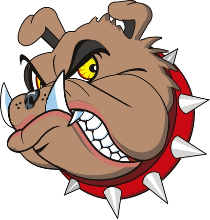 furious: Bulldog head very angry. Isolated Illustration