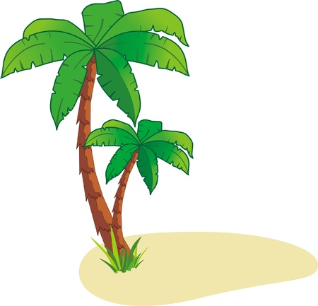 tropical forest: Palm on island Illustration