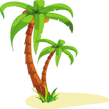 island isolated: Palm
