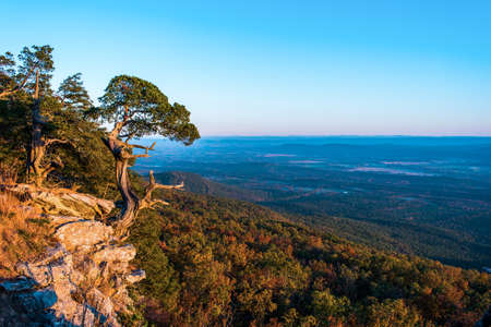 Old Cedar tree on the edge of a cliff in Mt. Magazine state park Arkansas Stok Fotoğraf
