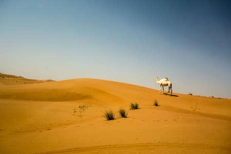 Single dromedary in red hatta desert in United Arab Emirates close to Dubai Stock Photo