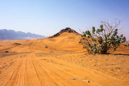 Dry bush and rock formation in Red Hatta Desert in United Arab Emirates close to Dubai
