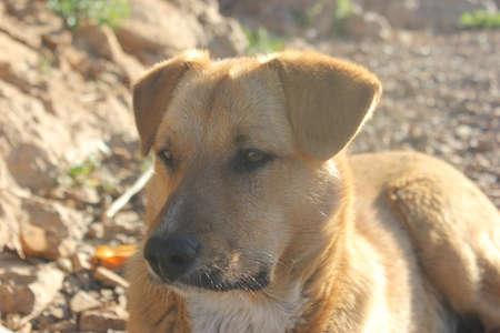 pity: pity dog