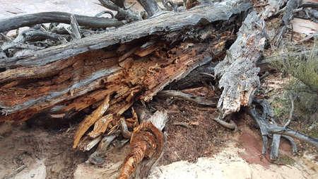 zion: Fallen Tree - Zion