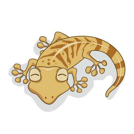 Gecko Cartoon Isolated