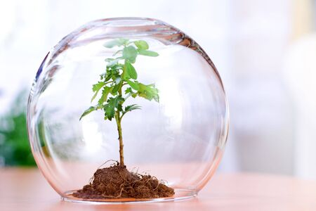 Protected green plant inside a glass sphere
