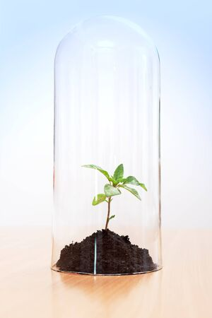 greenhouse effect: Greenhouse effect on a plant enclosed inside a glass tube. Global warming concept